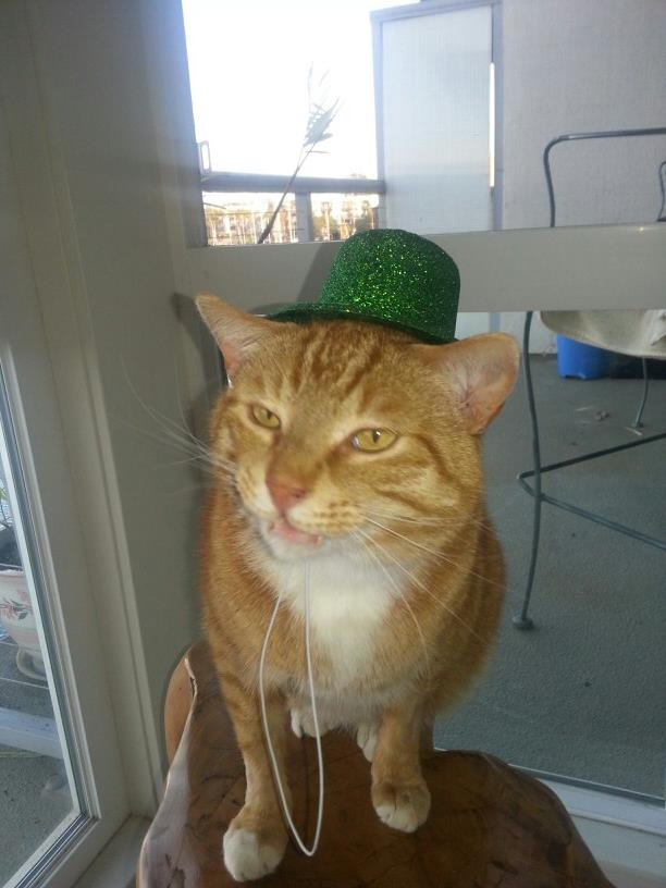 Tom hat