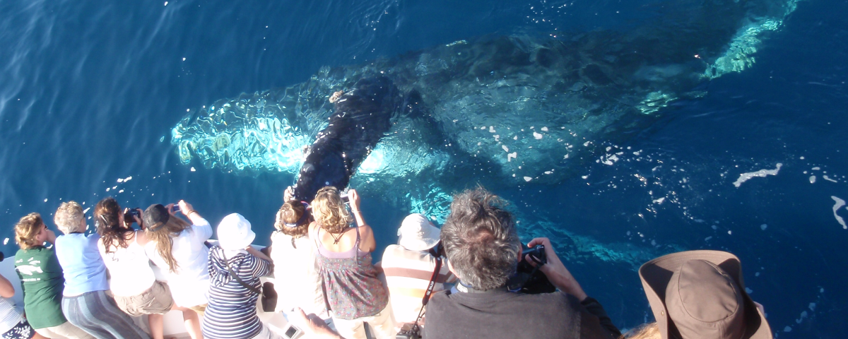 dana point whale watching groupon