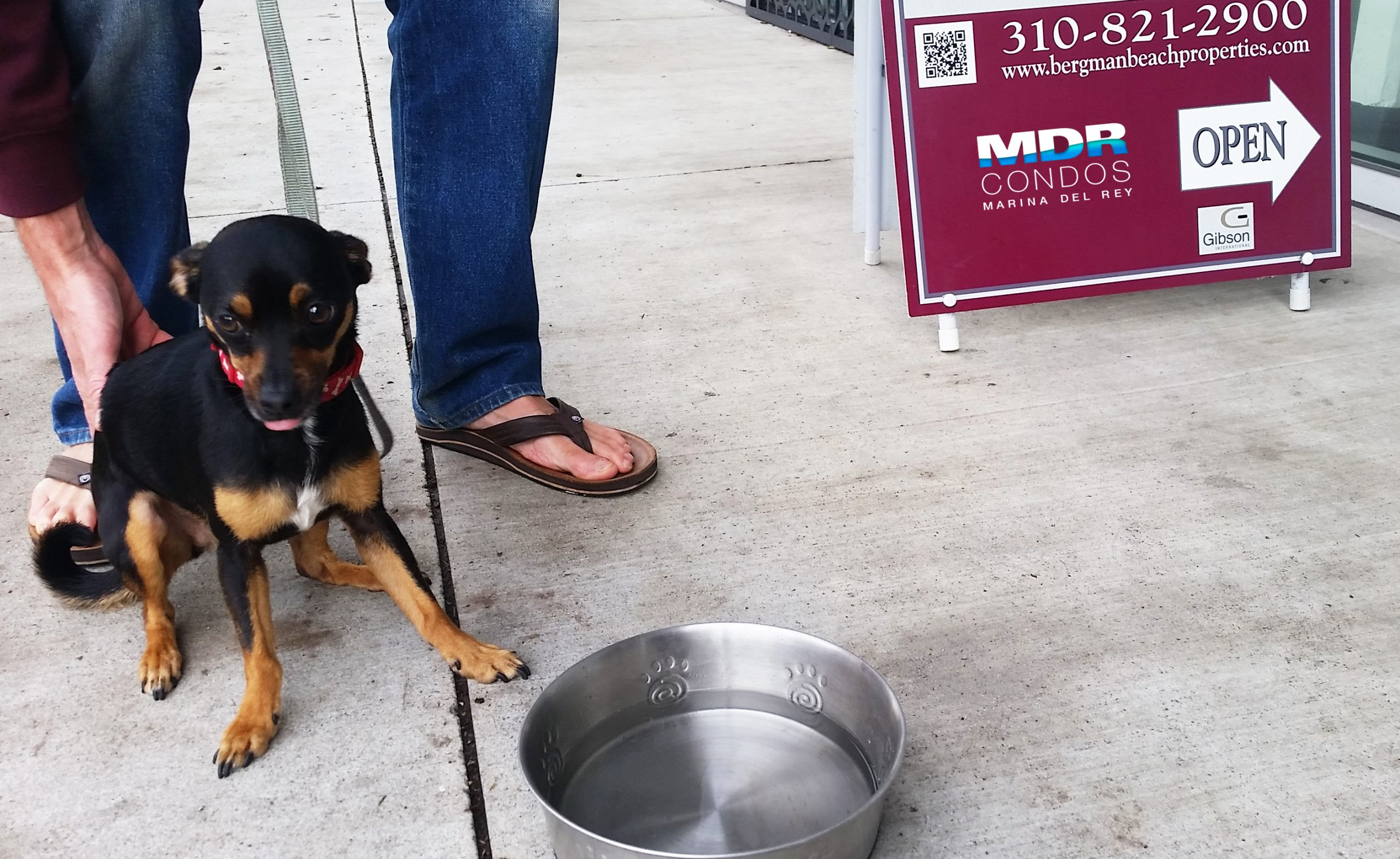 Meet Tom Selleck | Marina del Rey's Water Bowl Dog of the Day